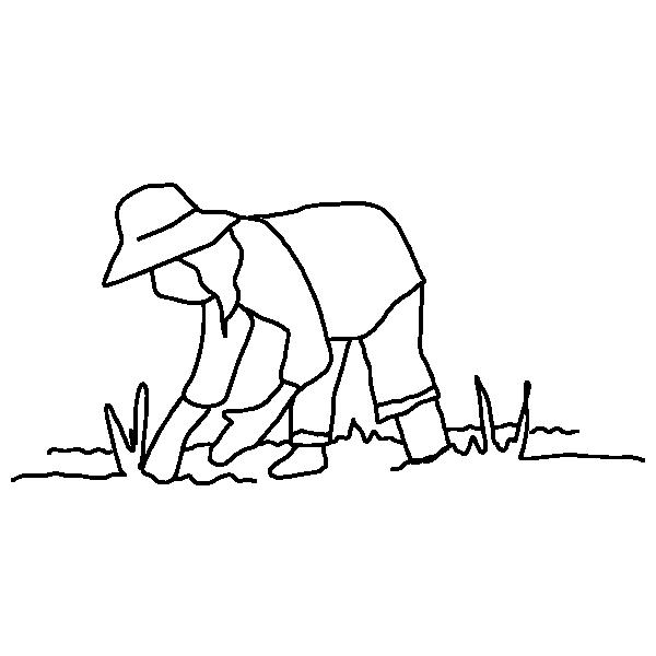 Maraîchère agroécologique